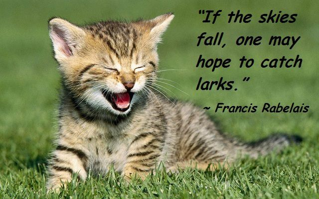 If The Skies Fall Kittens Cutest Smiling Animals Cats