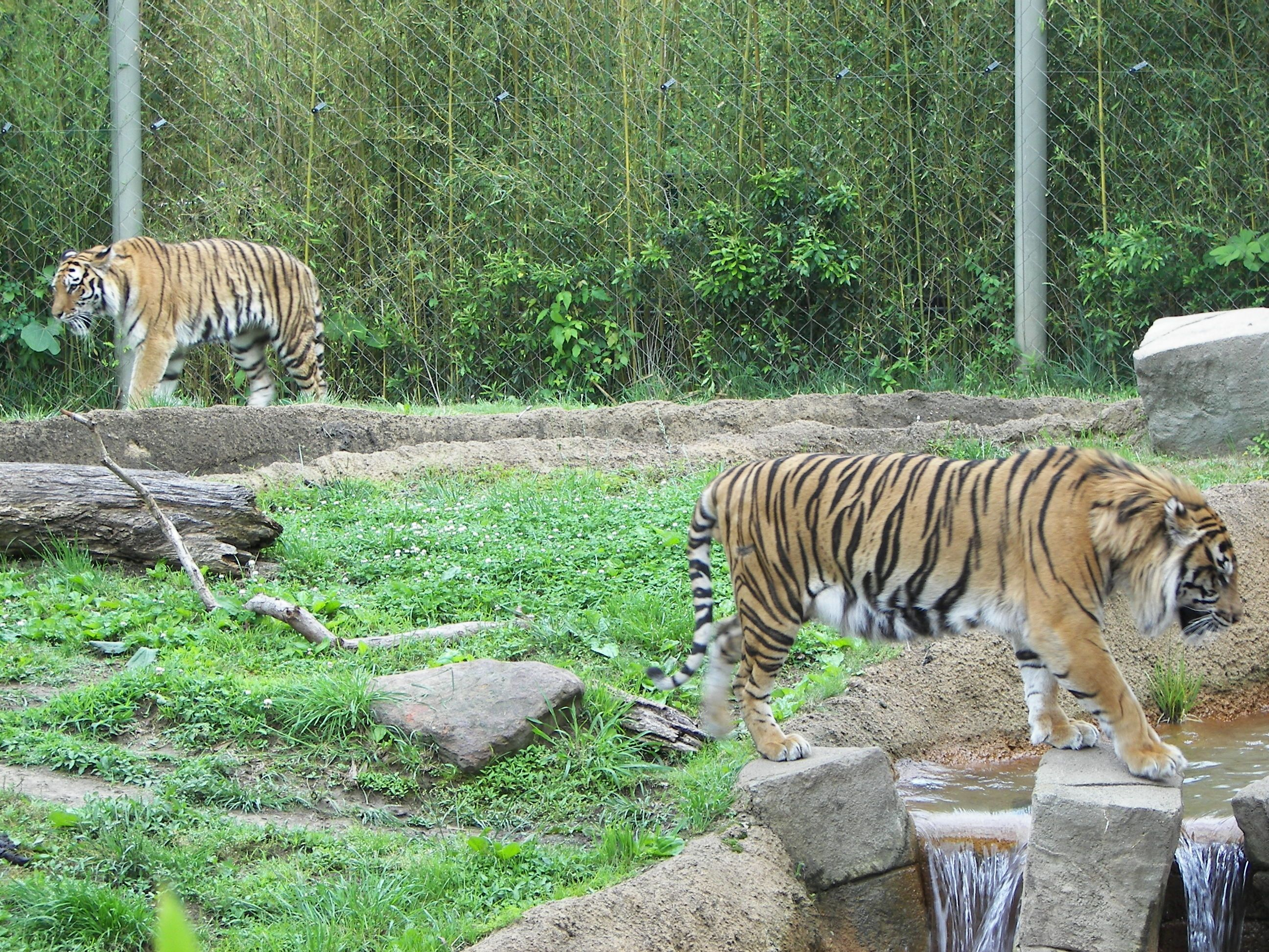 12++ What animals are in the zoo images