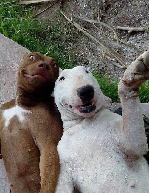 WHO SAID DOGS CAN'T CLICK A SELFIE?!?! XD