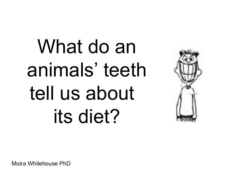 Short presentation about teeth and what they tell us about their short presentation about teeth and what they tell us about their owners carnivore meaning ccuart Image collections