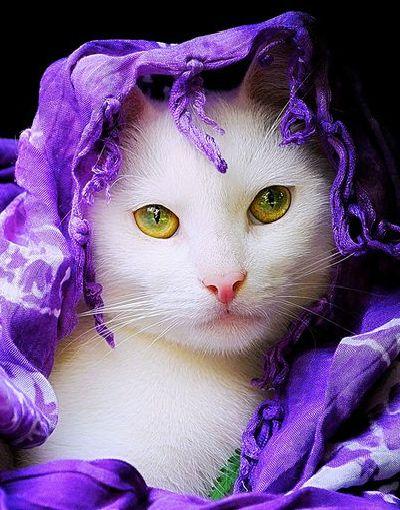 ≧^◡^≦gypsy cat ❤❤❤
