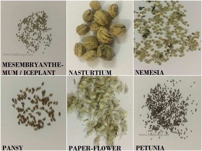 Flower Seed Identification Chart