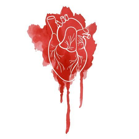 Image result for watercolor anatomical heart | Human heart ...