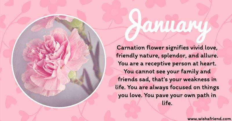 January Birth Flower The Carnation Sending Smiles Carnation Januaryflower Pinkcarnation Flowe In 2020 January Birth Flowers Birth Flowers Birth Month Flowers