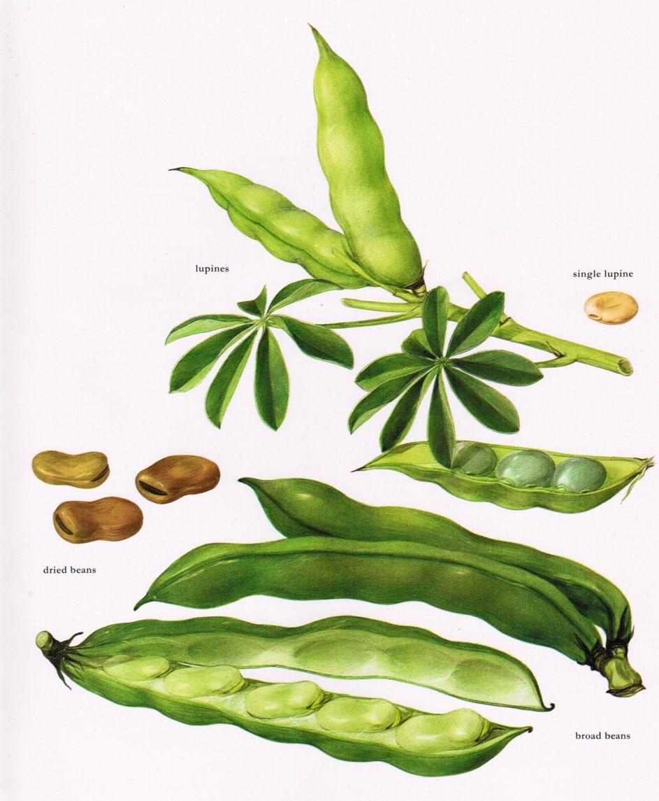 Eat Your Veggies Avec Images Illustration Botanique 640 x 480