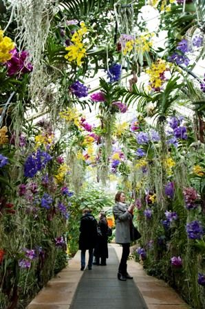 Kew Gardens wish we had seen these plants all in bloom. | Spring in ...