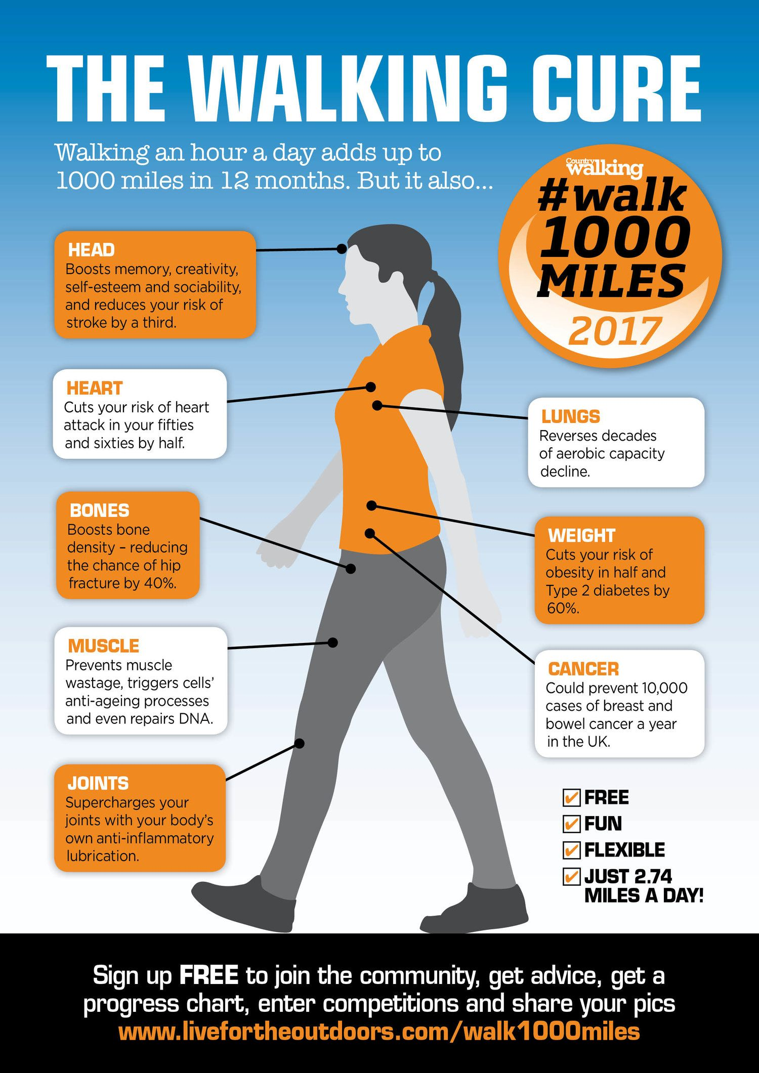 How many miles to walk daily