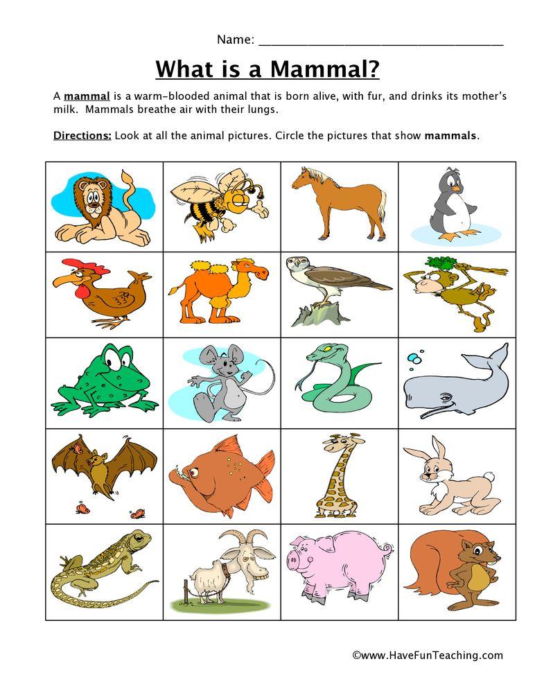 Mammal Classification Worksheet