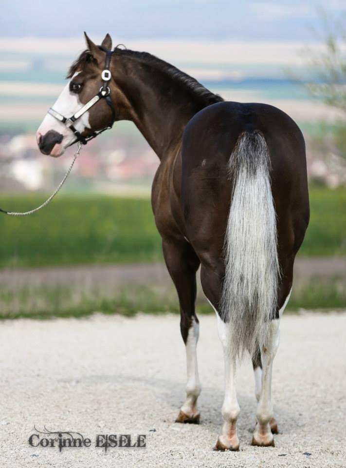 palomino horse color - photo #26