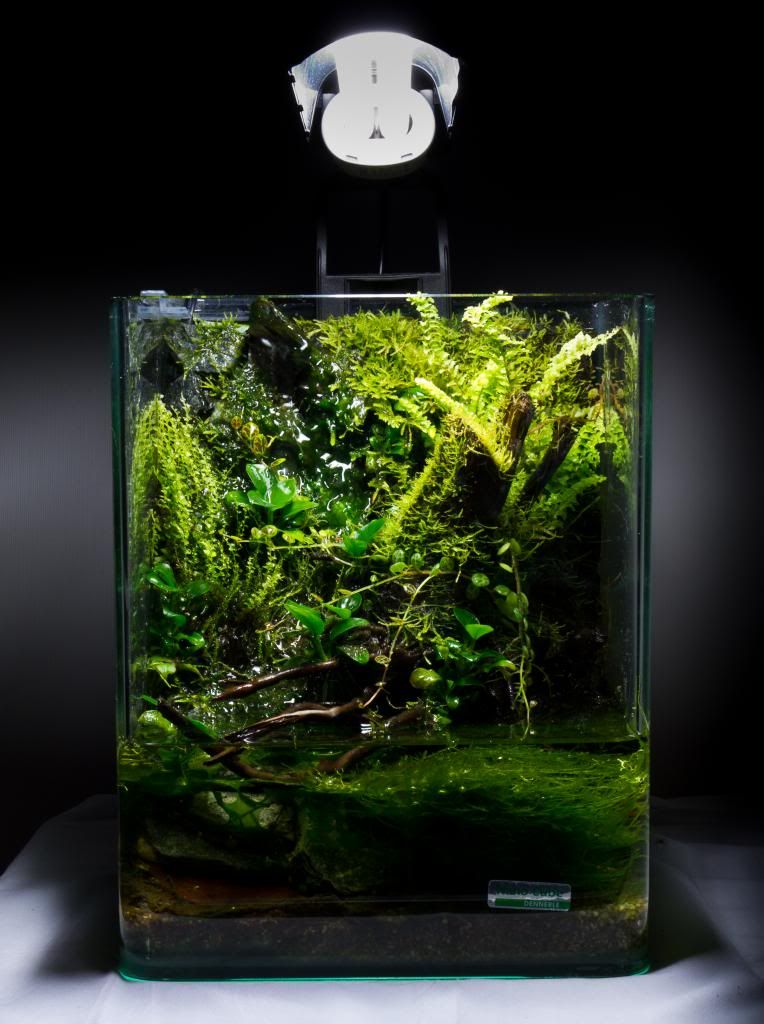 10 l nano paludarium build aquarium pinterest. Black Bedroom Furniture Sets. Home Design Ideas