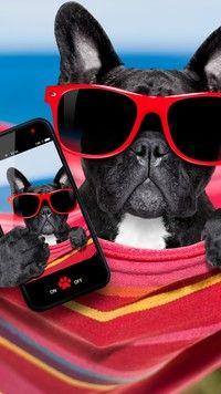 Buldog Francuski W Okularach Z Telefonem Buldog Pinterest Dogs