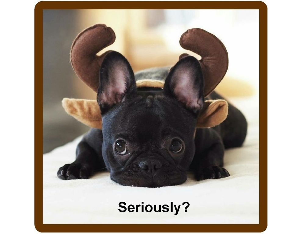 Details About Funny French Bull Dog Horns Refrigerator Tool Box Magnet Gift Card Insert Bulldog French Bulldog Puppies Bulldog Puppies