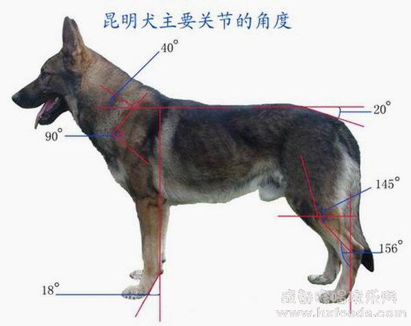 The Kunming Wolfdog Was Created In The Early 1950s To Meet The Need For Military Dogs In Yunnan They Were Bred From Ger Wolf Dog Wolf Dog Breeds Military Dogs They have been trained as military assistant dogs to perform a variety of tasks such as detecting mines. pinterest