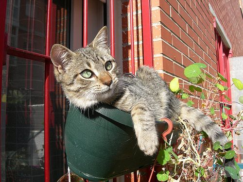 Cats in Flower Pots: So Blooming Cute! - Catster