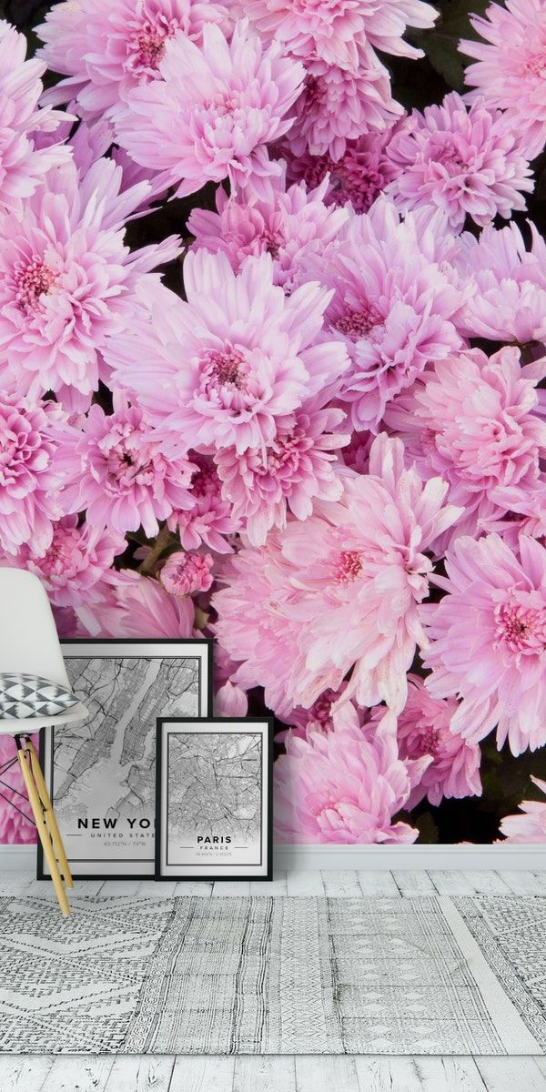Light Pink Chrysanthemums 1 wall mural from happywall