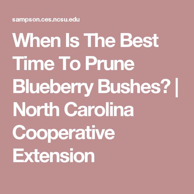 When Is The Best Time To Prune Blueberry Bushes North Carolina Cooperative Extension Blueberry Bushes Blueberry Prune