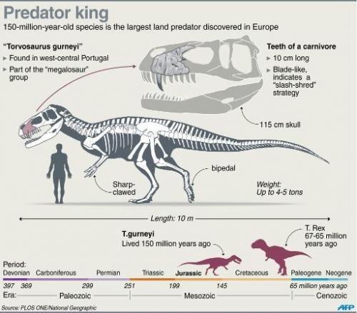 Torvosaurus gurneyi découvert récemment au Portugal,  Europe.