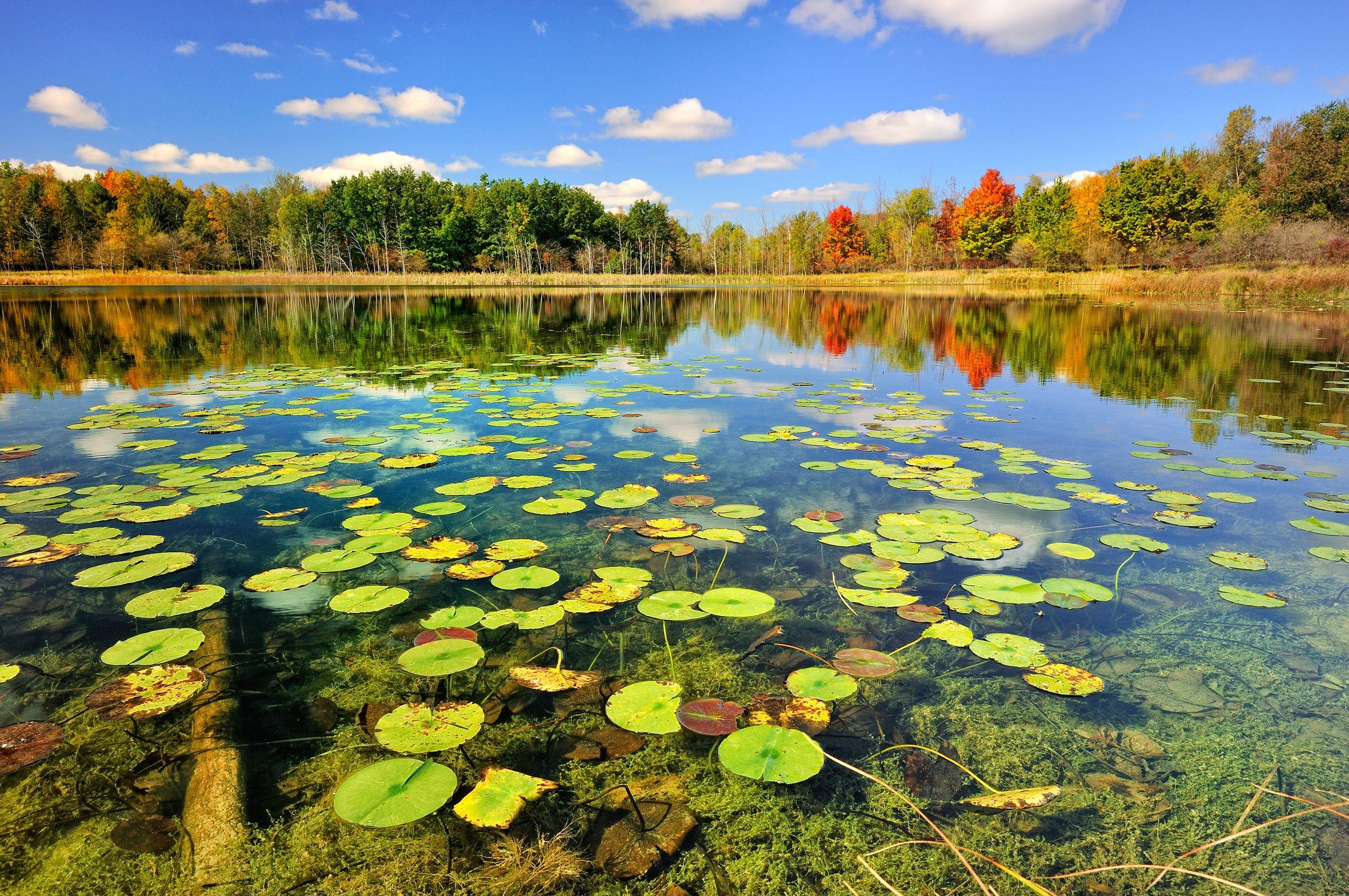 фото осень природа - Поиск в Google | Пейзажи, Озера ...