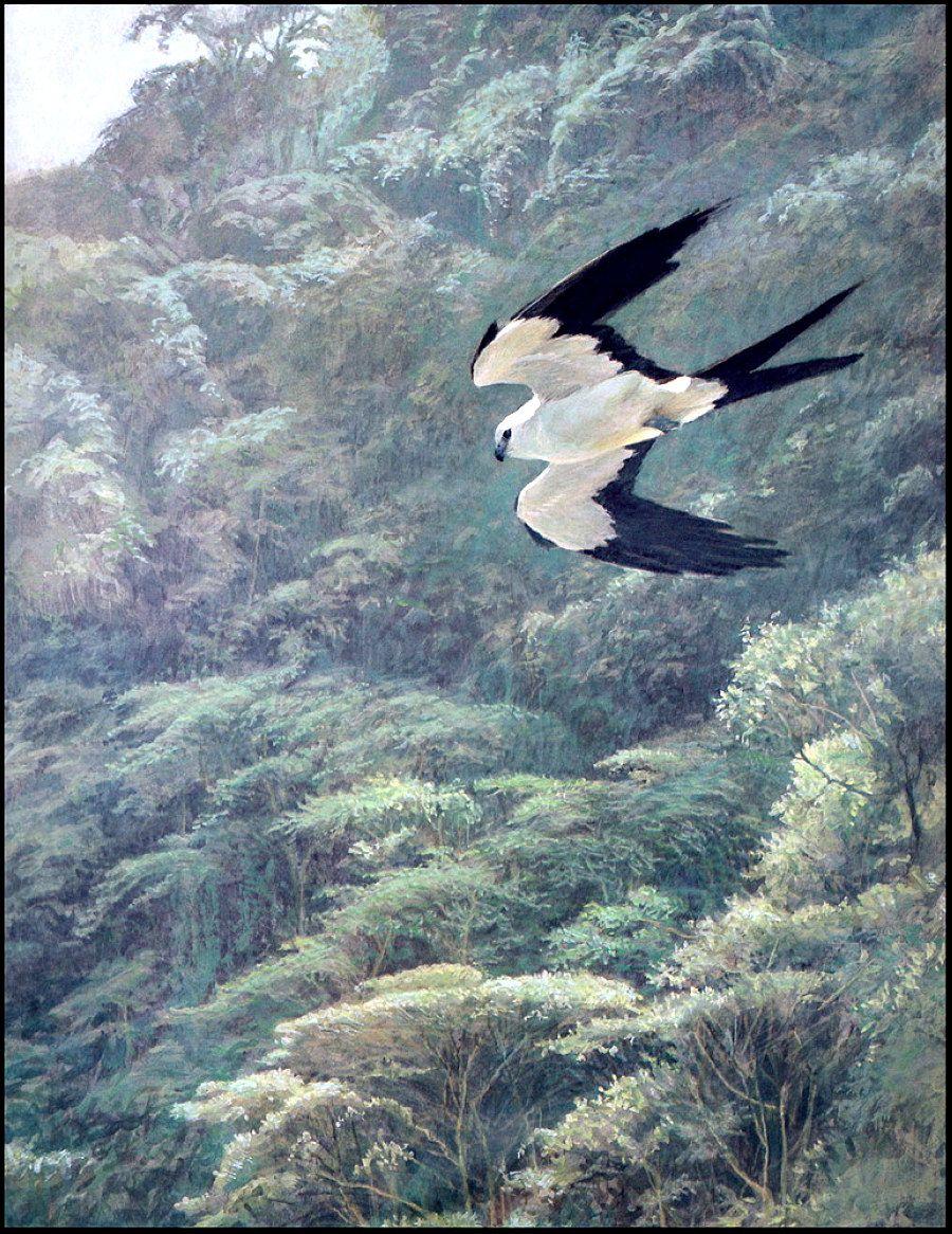 Анималистическая живопись Роберта Бейтмена (686 работ) в ...