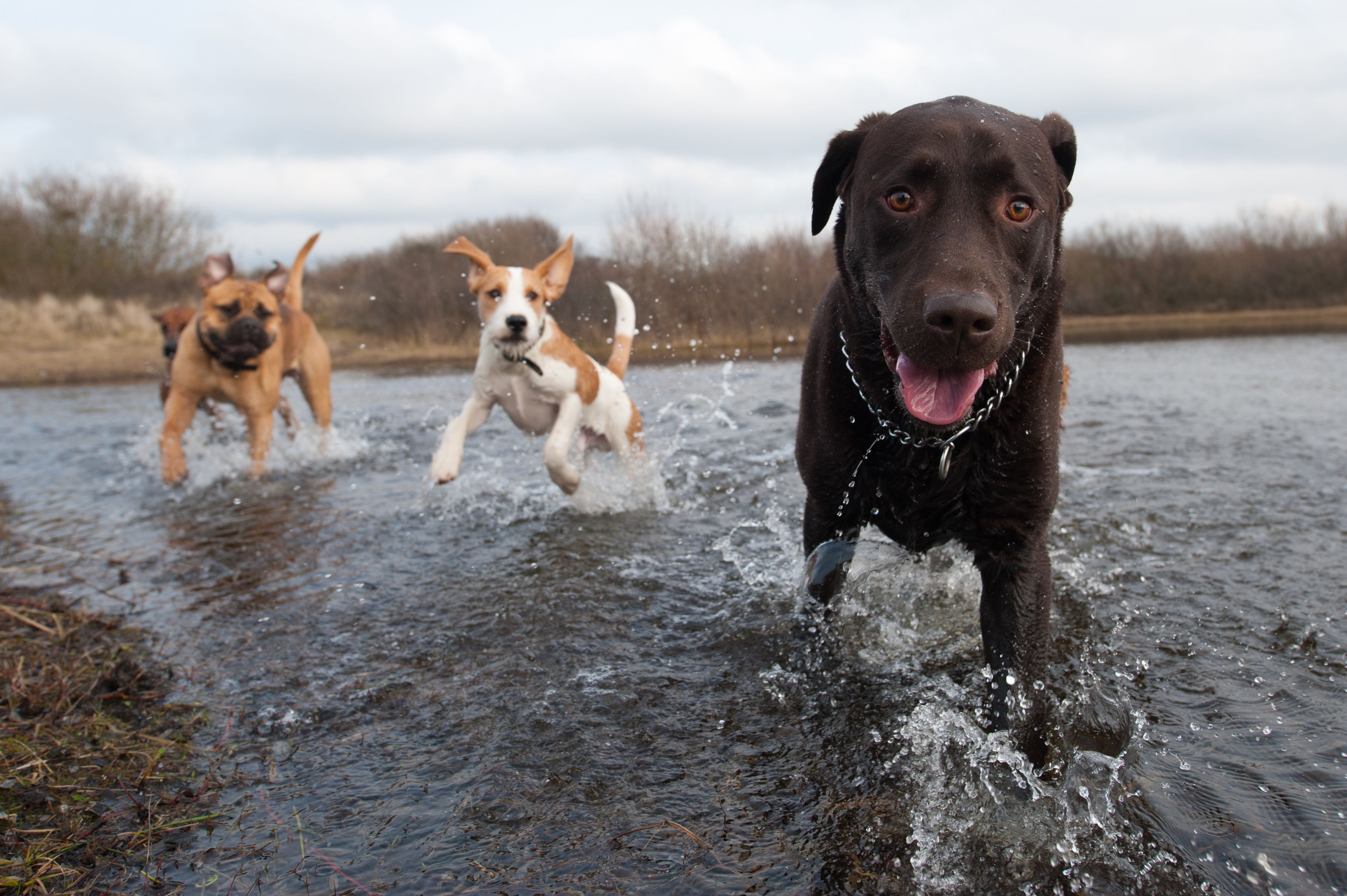 Playing in a river with all my friends!! Could not ask for a better day! #dog #dogs #puppy #puppies #pet #pets #travel #trip #traveling #PetTravel #cute #beach #happy