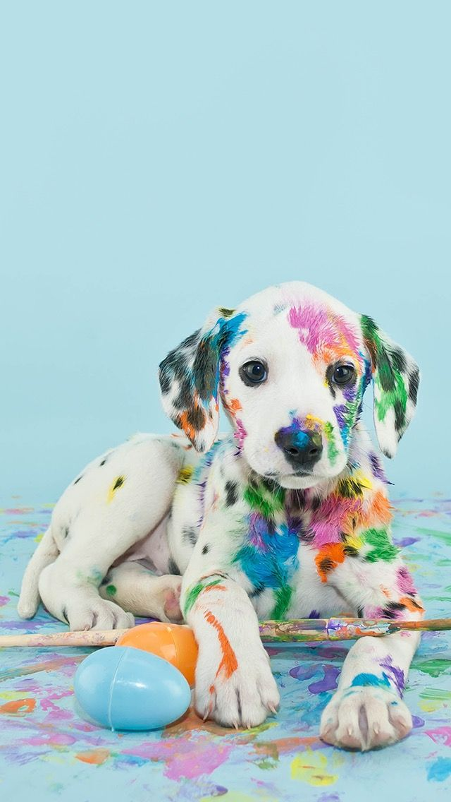 Rainbow Spotted Dalmatian Puppy Got Into Paint Wallpaper Tumblr Iphone