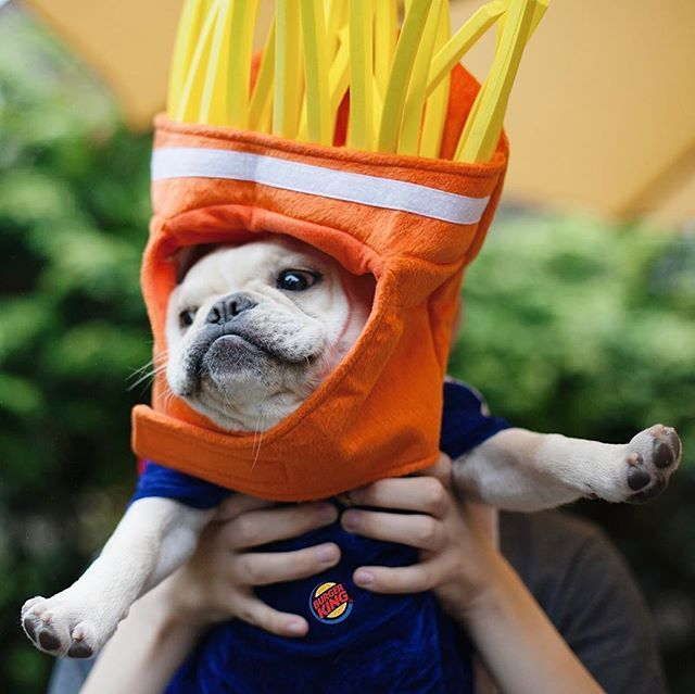Theo As Frenchie Fries French Bulldog In A French Fries Costume