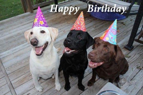 Happy Birthday Wishes With Lab Dogs Birthday Birthday Wishes