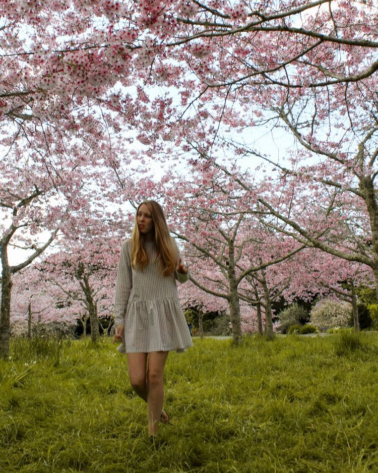 7 Ways To Enjoy Spring In Auckland Bucket List Spring Cherry Blossom Pictures Cathedral Cove