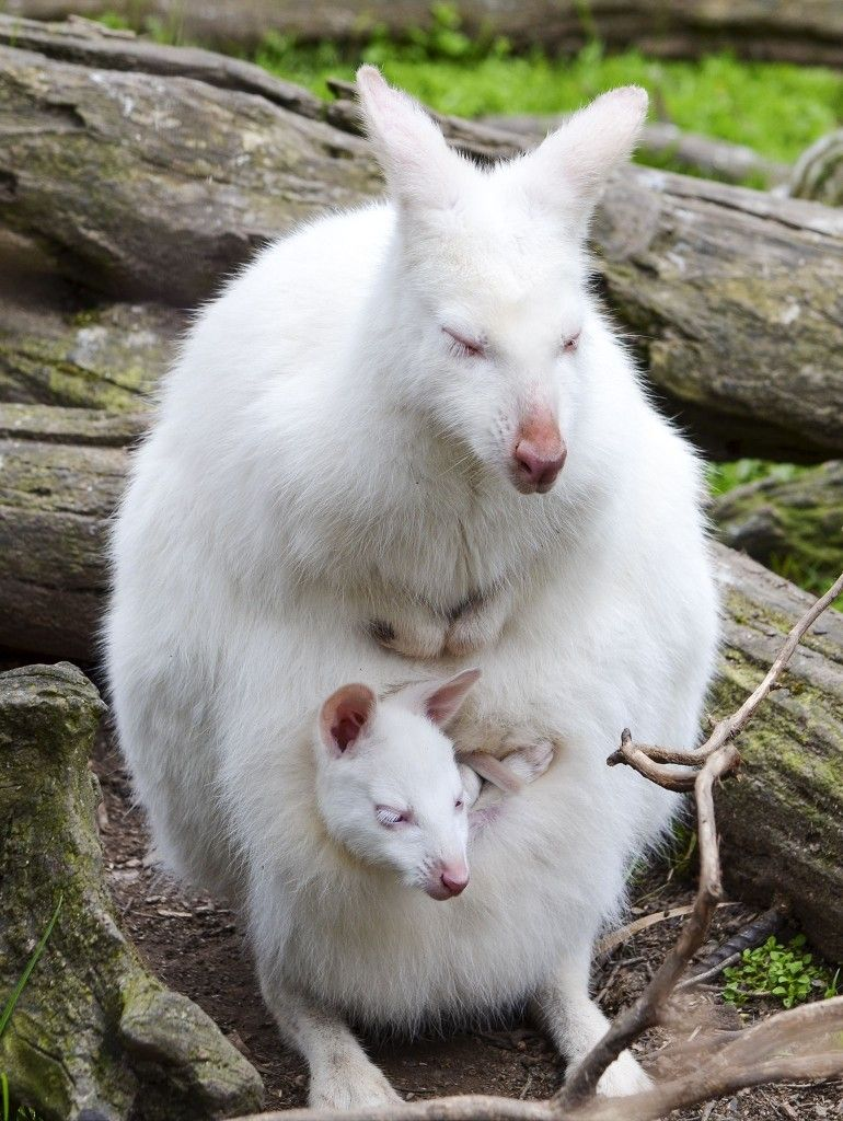 Stella Brezina Adli Kullanicinin Wildlife Animals Panosundaki Pin