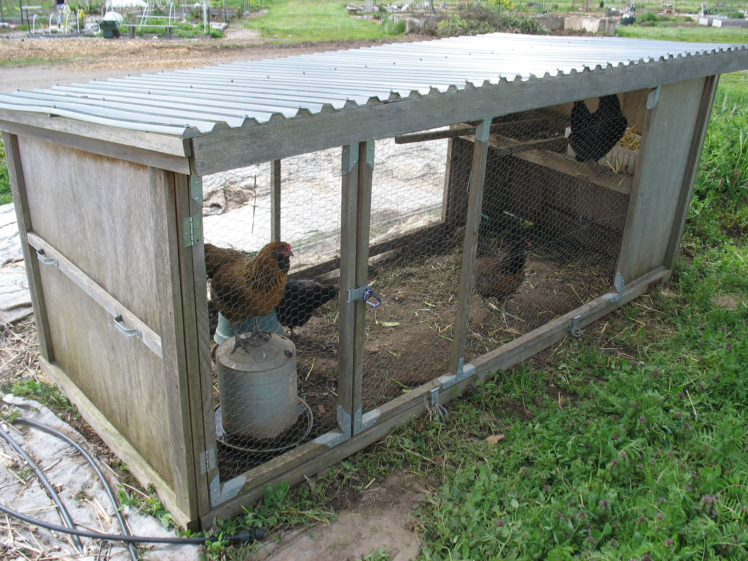 Diy chicken coop chickens need more protection did you see the size of that chicken for Diy small chicken coop