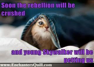 Jimi J Jemel Feline Rebellion Kitten Eyes Cats Animals