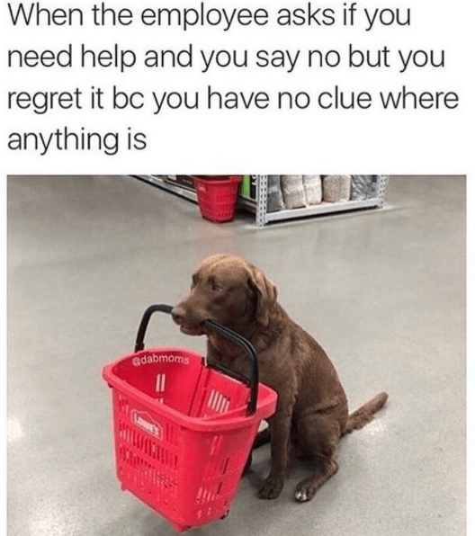 101 Best Funny Dog Memes To Make You Laugh All Day Cute Dog Memes Dog Jokes Funny Animals
