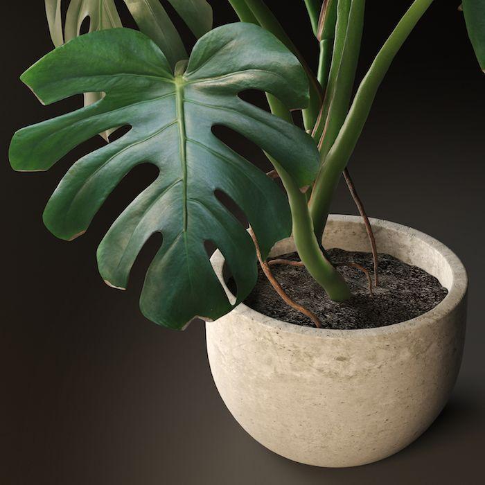 Große Zimmerpflanze Wenig Licht ▷ 1001 + ideen für zimmerpflanzen für wenig licht