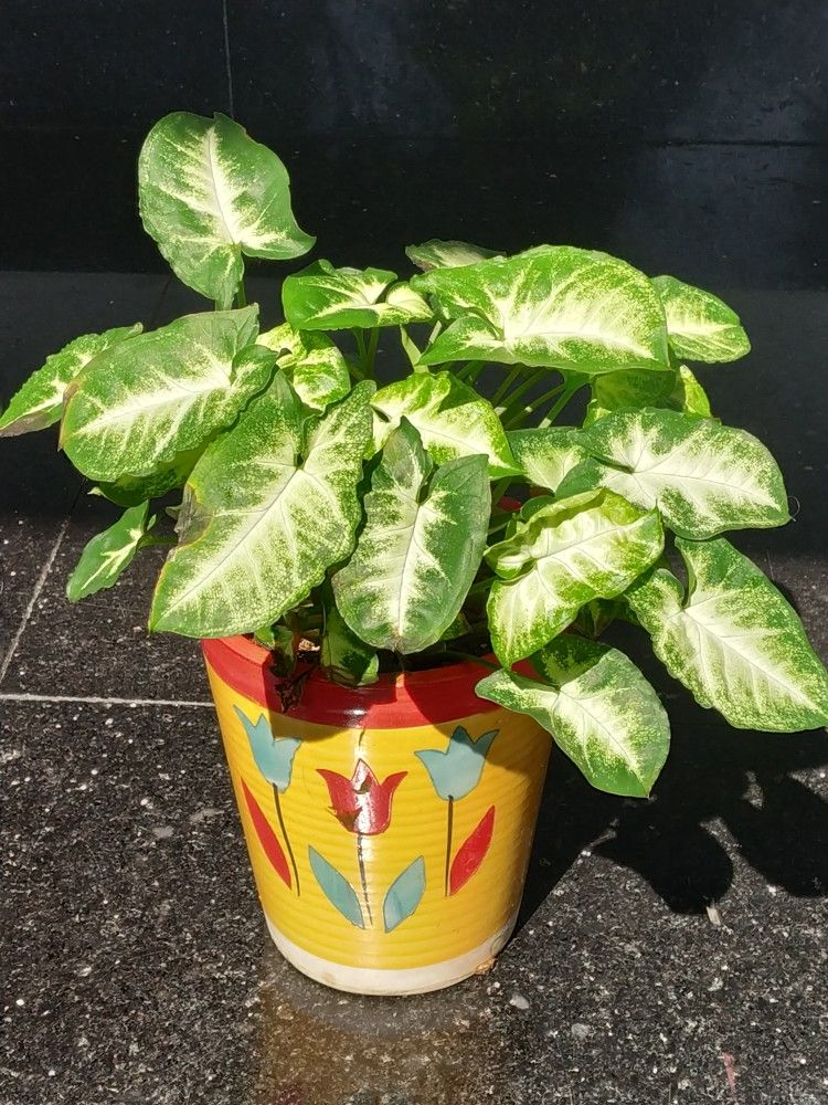 Beautiful Plants You Can Grow Indoors For Positive Energy 400 x 300