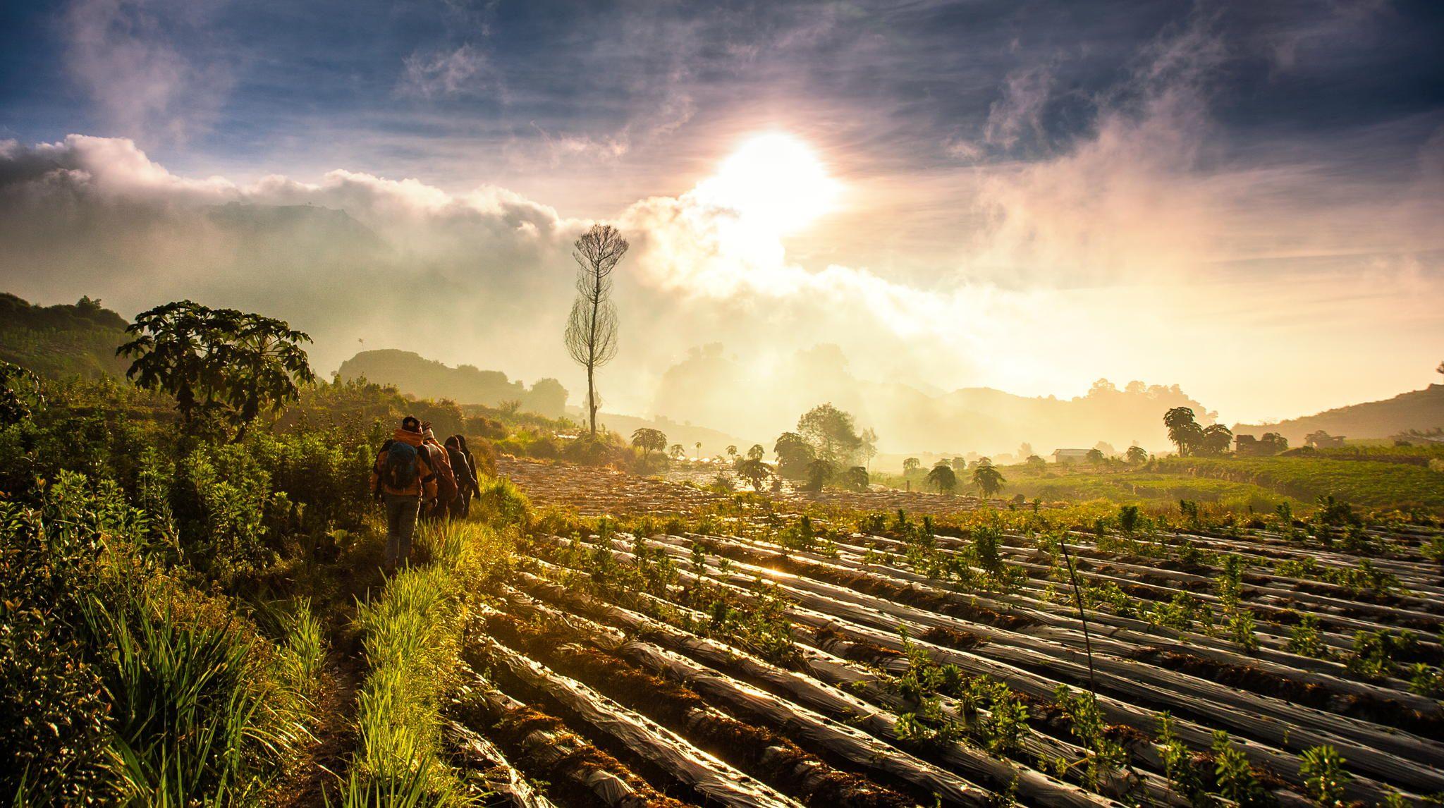 Crossing Potato Field by Ahmad Syukaery on 500px Indonesia