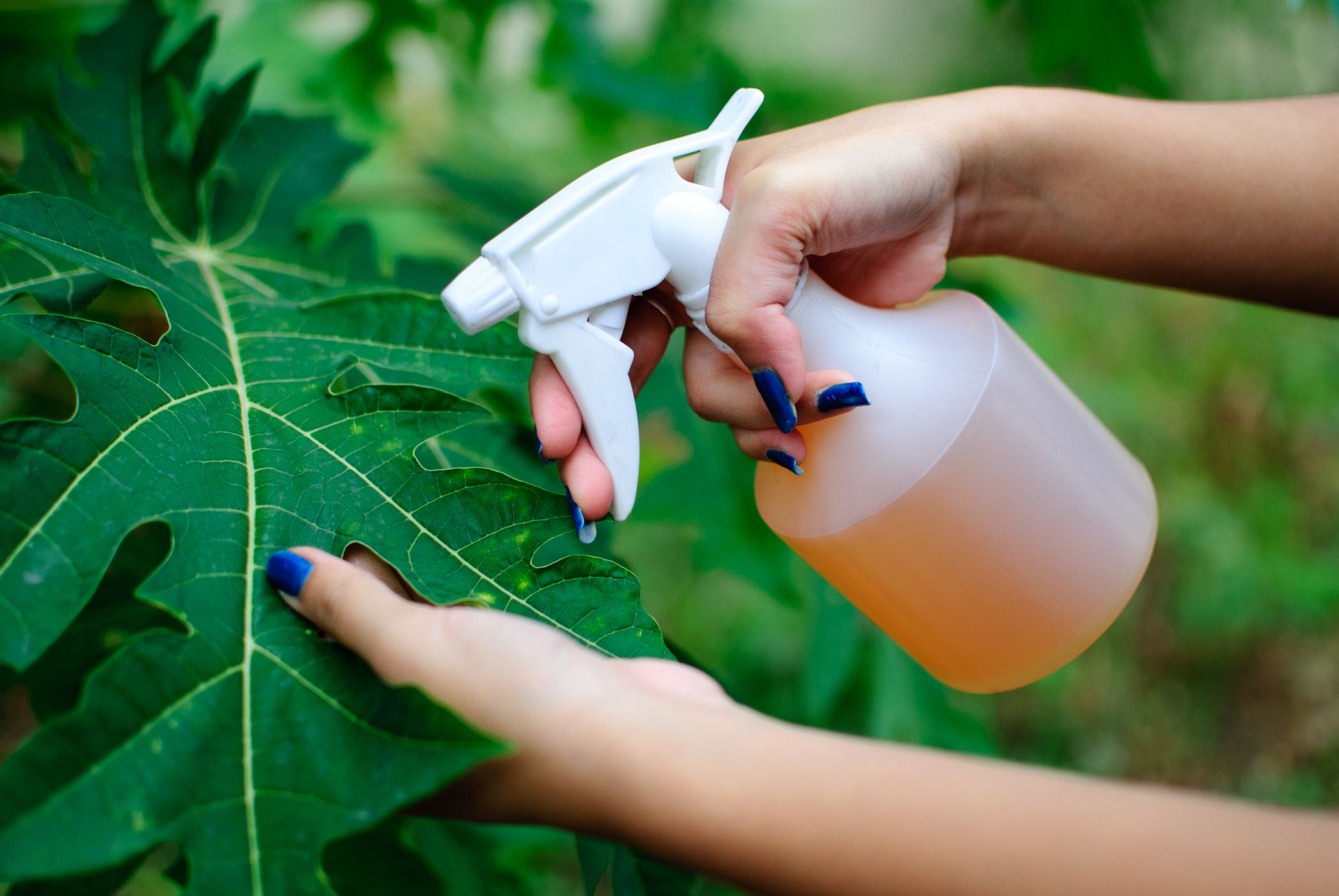 Get rid of animal pests with hot pepper spray wikihow to - How to get rid of bugs in garden ...