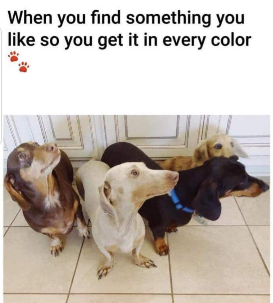 Pin by carmen scheepers on doxies weiner dog humor