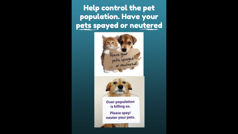 Petition The Toronto Humane Society Spay And Neuter Your Pets