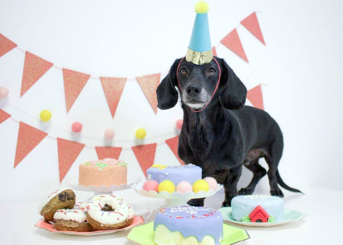 Here Is The Best Way To Celebrate Your Dog S Birthday Spotted Dog Bakery Bark And Biscuits Happy Birthday Dog Dog Birthday Dog Bakery