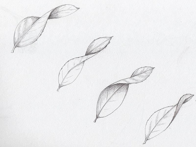 Curled Leaves Flower Drawing Tutorials Leaf Drawing Pencil Art Drawings