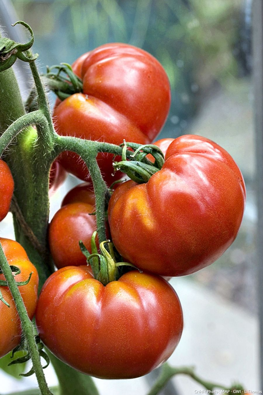 Potager les variétés zéro traitement Jardin potager