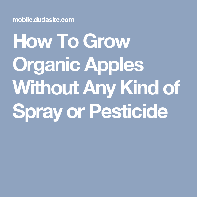 How To Grow Organic Apples Without Any Kind Of Spray Or Pesticide - Rapper gets called out for lying online internet starts its own challenge in response