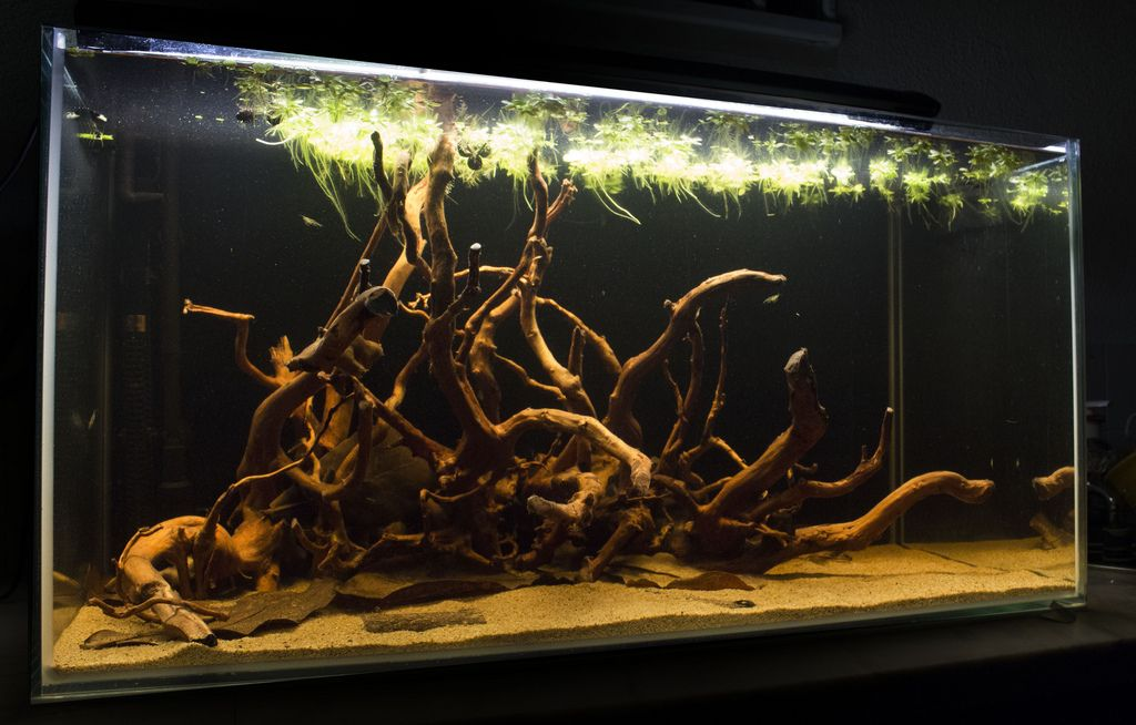 how to avoid floating wood in aquarium