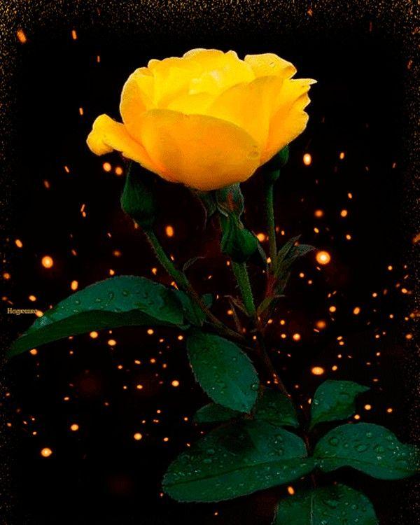 Pin De Wiccana En La Vie En Rose Flores Rosadas Rosas Amarillas Y