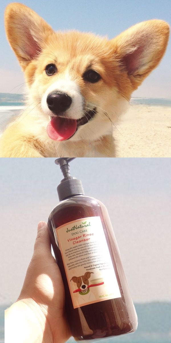 Dry Skin Is Fairly Easy To Recognize Part Your Dog S Hair You