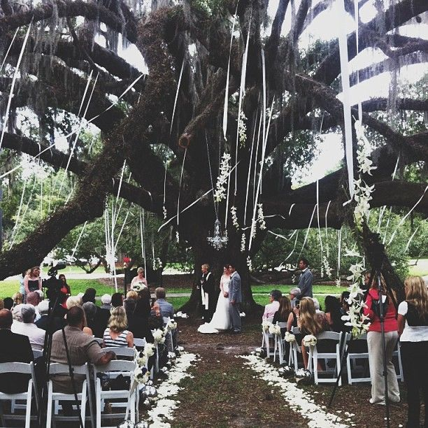 Outdoor Wedding Ceremony Orlando: Orlando Science Center Wedding Ceremony At The Tree With