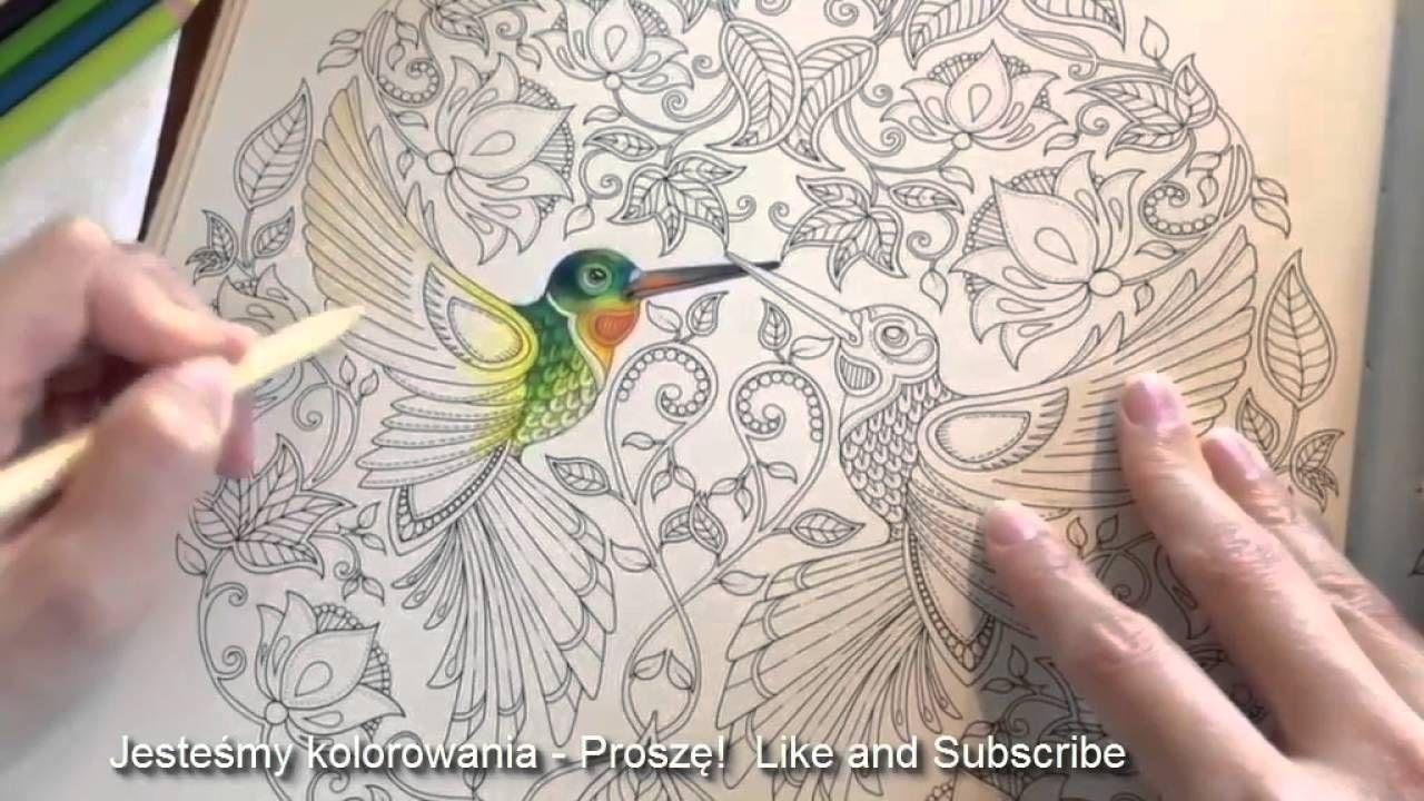 Kolorowanki Dla Dorosłych Kolorowanki Dla Dzieci Koliber Adult