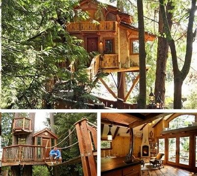 Pics: Not your average tree house | Home - Entertainment