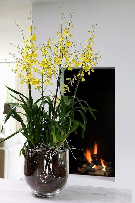 Oncidium Prachtige Bloemen Orchideeën Kamerplanten
