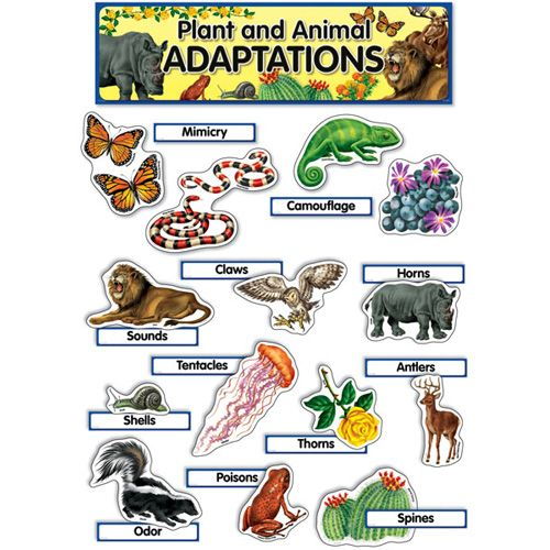 7 Living Things Adapt To Their Environment Animal Adaptations